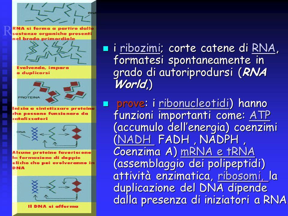 RNA WORLD i ribozimi; corte catene di RNA, formatesi spontaneamente in grado di autoriprodursi (RNA World,)
