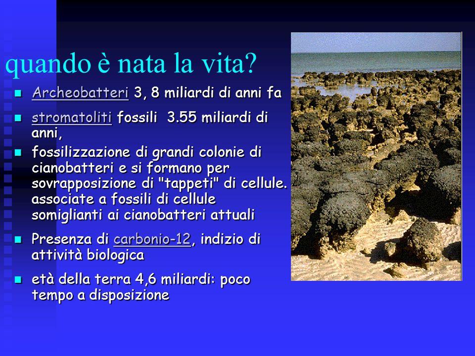quando è nata la vita Archeobatteri 3, 8 miliardi di anni fa