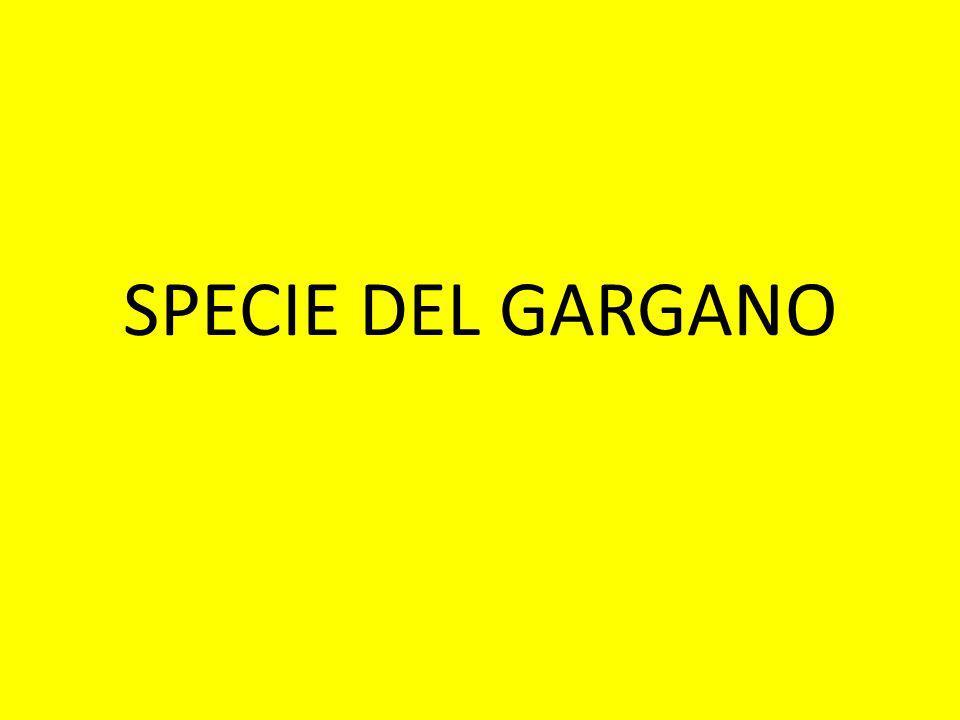 SPECIE DEL GARGANO