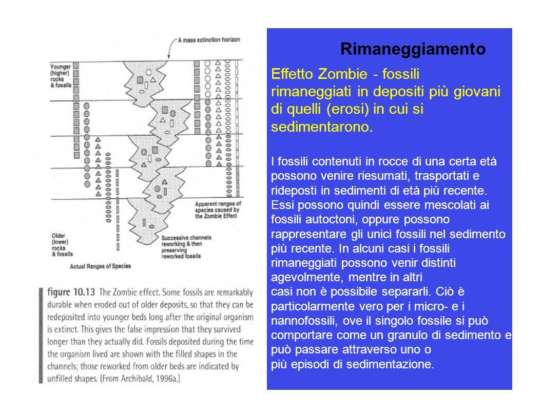 Rimaneggiamento Effetto Zombie - fossili