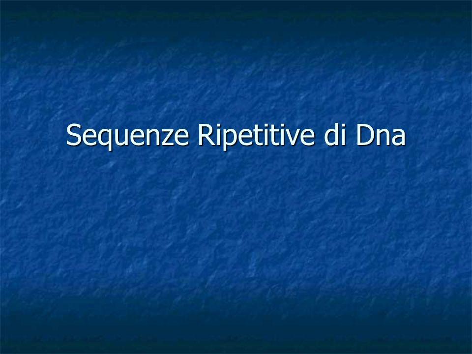 Sequenze Ripetitive di Dna