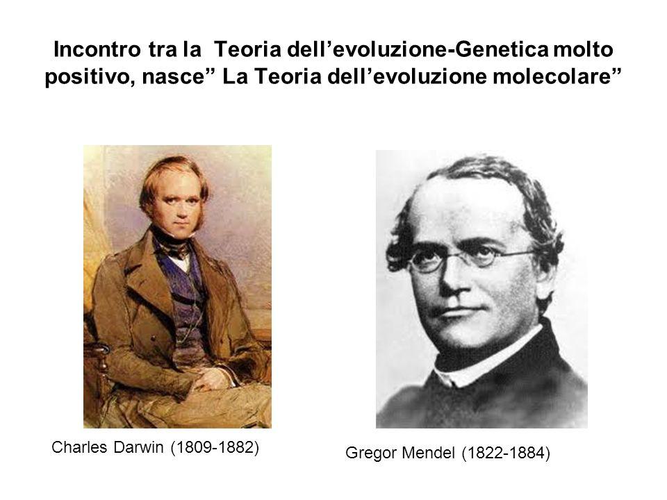 Incontro tra la Teoria dell'evoluzione-Genetica molto positivo, nasce La Teoria dell'evoluzione molecolare