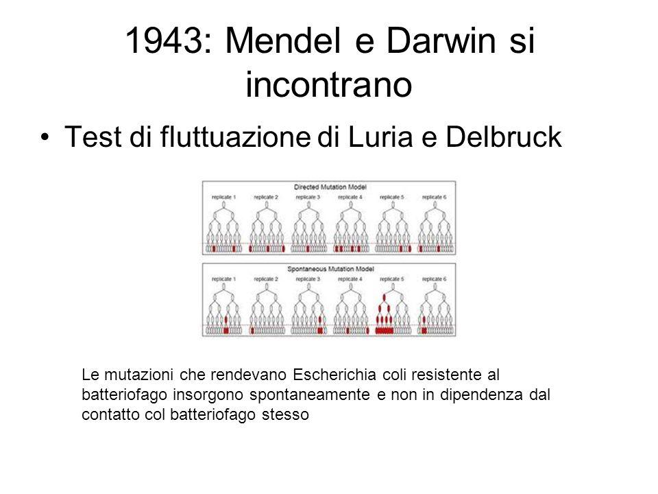1943: Mendel e Darwin si incontrano