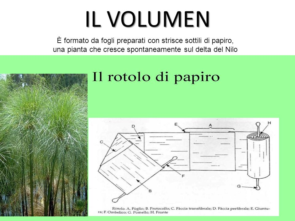 IL VOLUMEN È formato da fogli preparati con strisce sottili di papiro,
