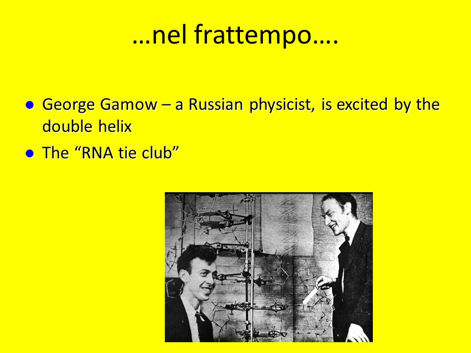 …nel frattempo…. George Gamow – a Russian physicist, is excited by the double helix.