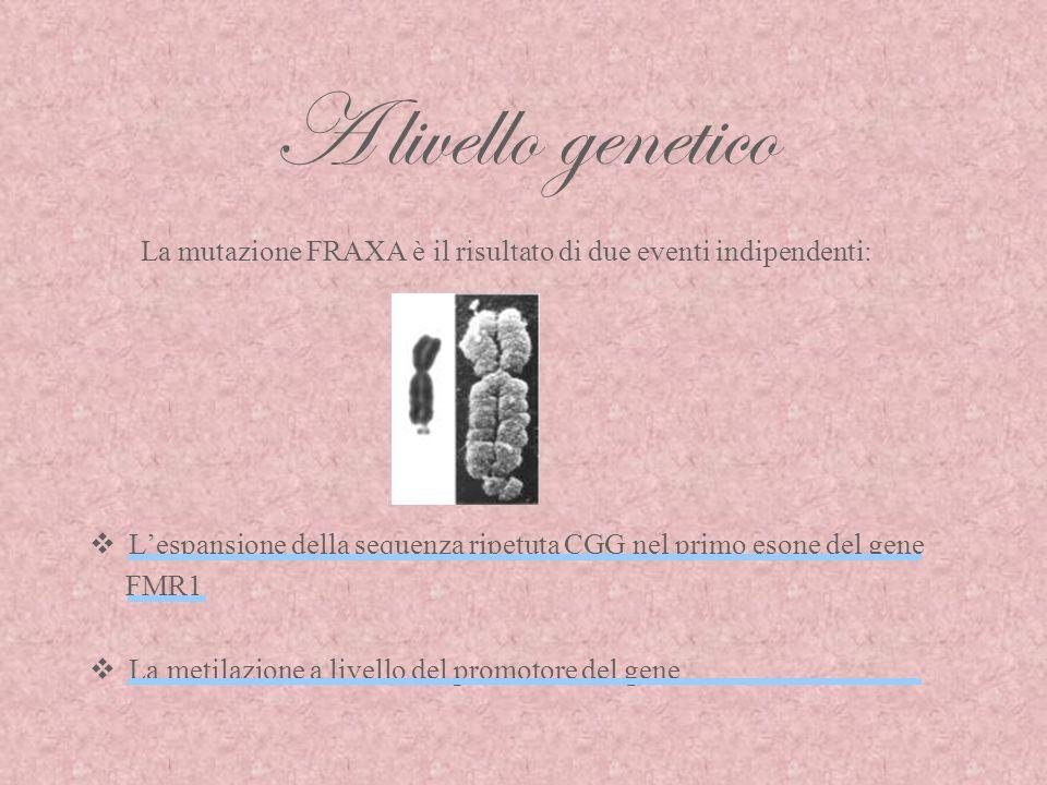 A livello genetico La mutazione FRAXA è il risultato di due eventi indipendenti: L'espansione della sequenza ripetuta CGG nel primo esone del gene.
