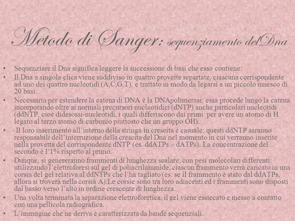 Metodo di Sanger: sequenziamento delDna