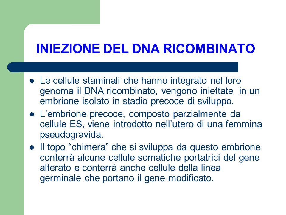 INIEZIONE DEL DNA RICOMBINATO