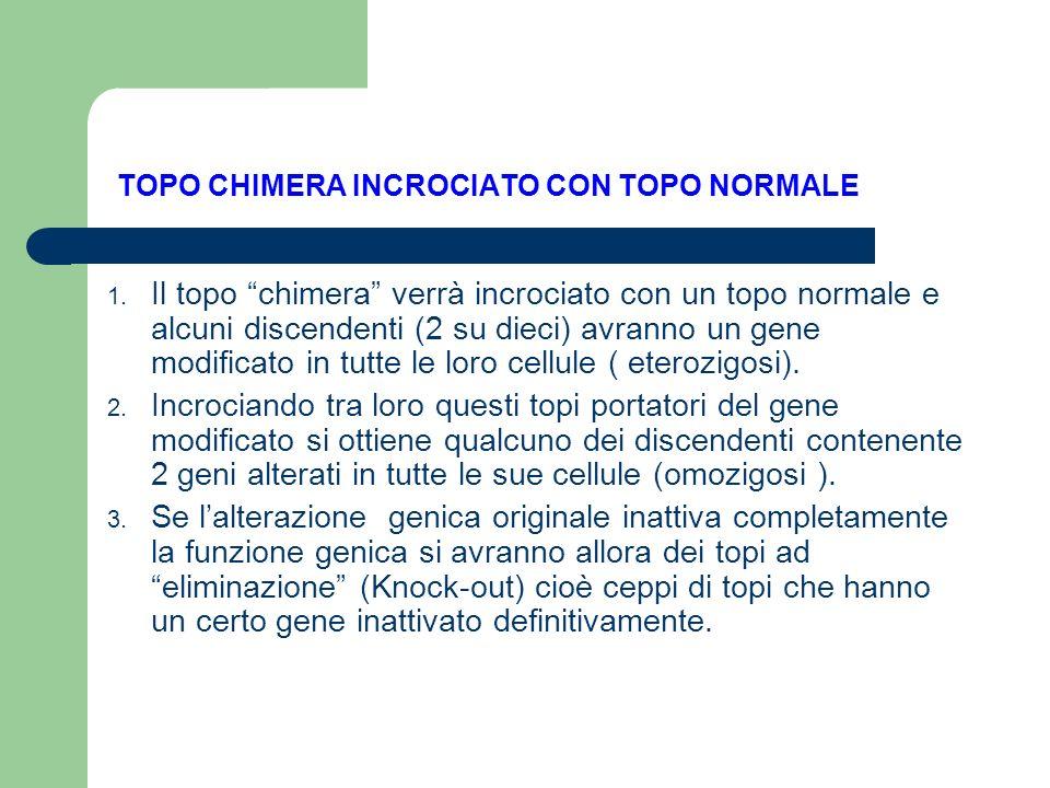TOPO CHIMERA INCROCIATO CON TOPO NORMALE