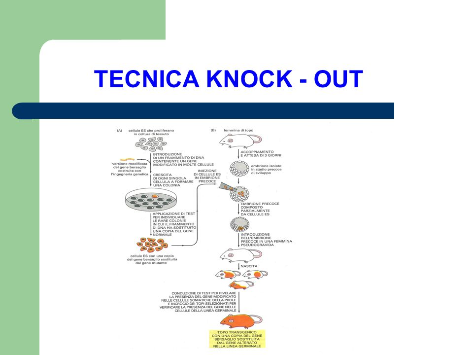 TECNICA KNOCK - OUT