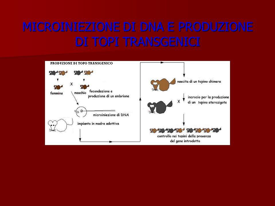 MICROINIEZIONE DI DNA E PRODUZIONE DI TOPI TRANSGENICI