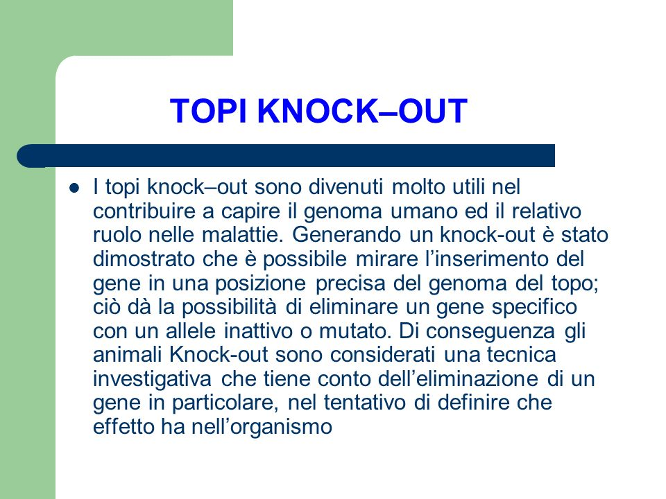 TOPI KNOCK–OUT