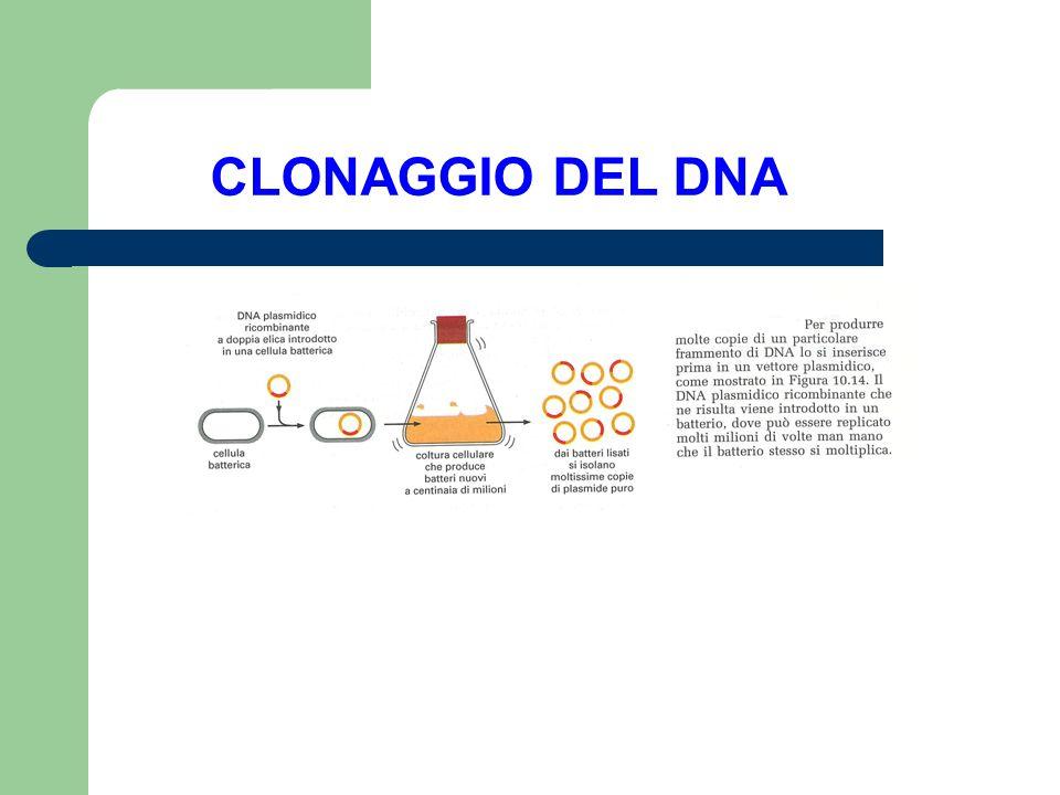 CLONAGGIO DEL DNA