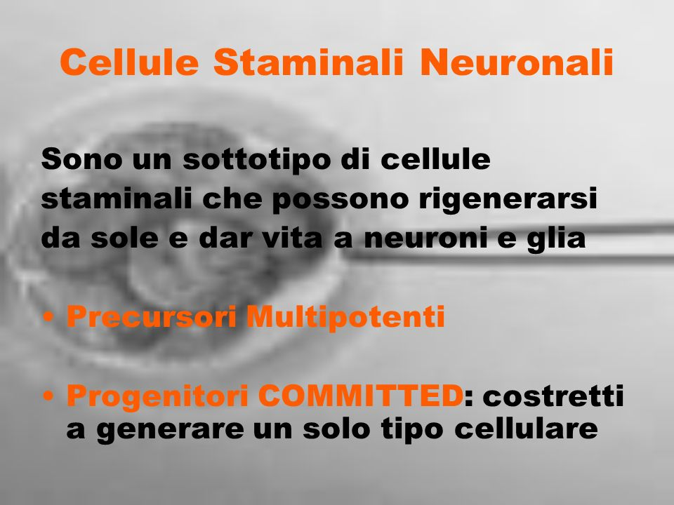 Cellule Staminali Neuronali