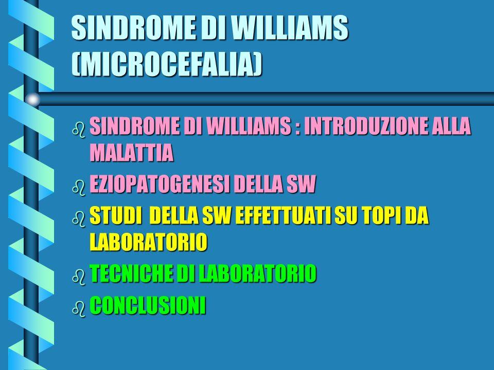SINDROME DI WILLIAMS (MICROCEFALIA)