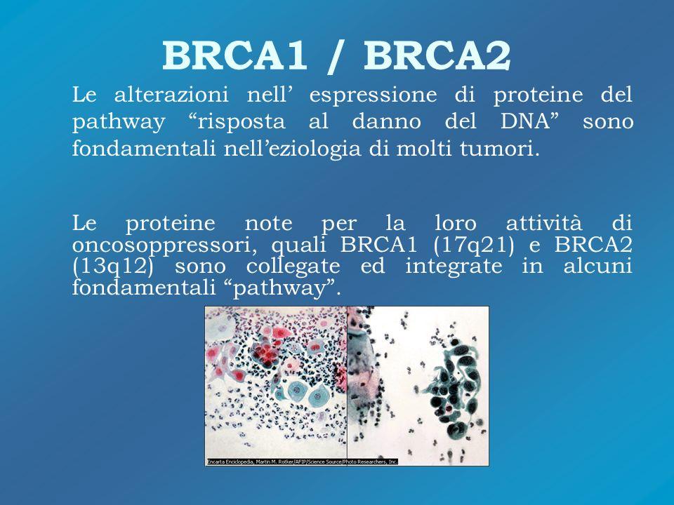 BRCA1 / BRCA2 Le alterazioni nell' espressione di proteine del pathway risposta al danno del DNA sono fondamentali nell'eziologia di molti tumori.