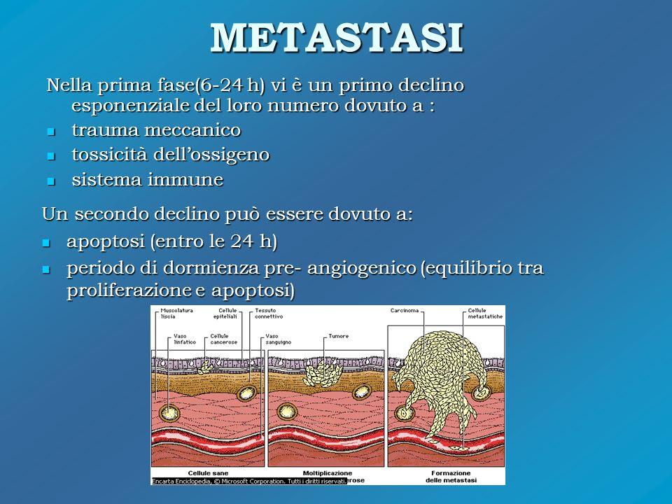 METASTASI Nella prima fase(6-24 h) vi è un primo declino esponenziale del loro numero dovuto a : trauma meccanico.