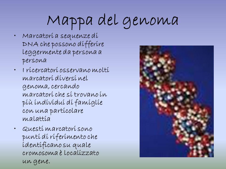 Mappa del genoma Marcatori a sequenze di DNA che possono differire leggermente da persona a persona.