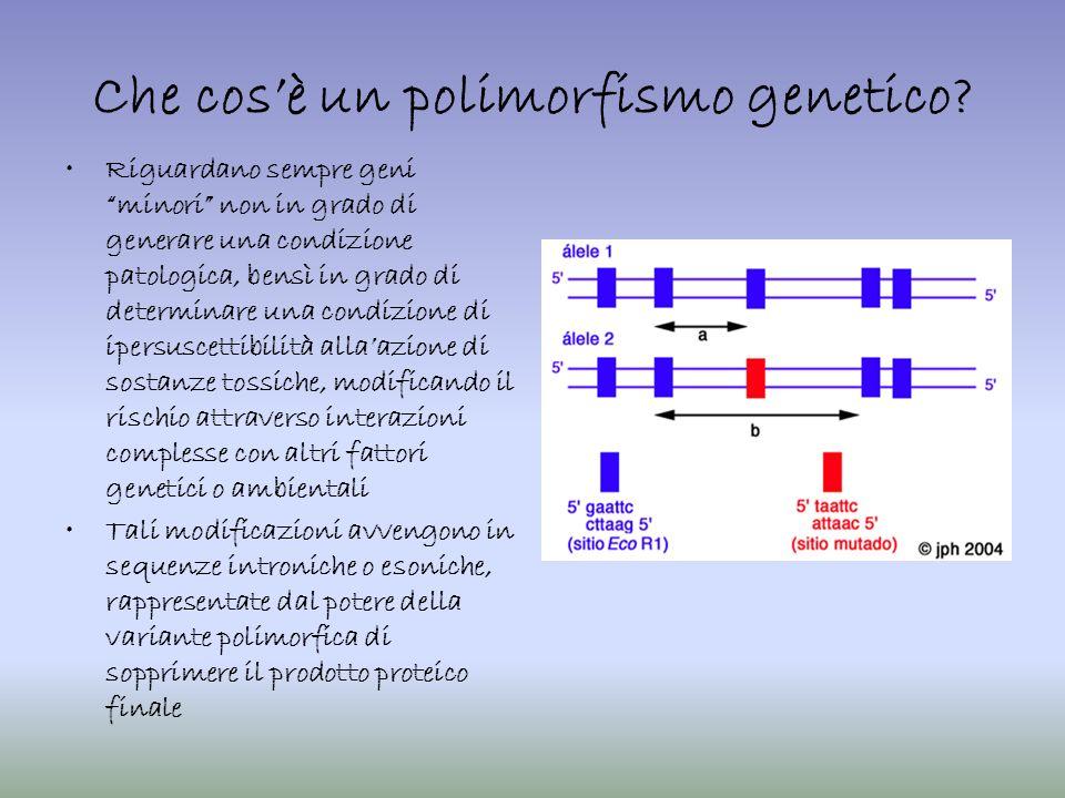 Che cos'è un polimorfismo genetico