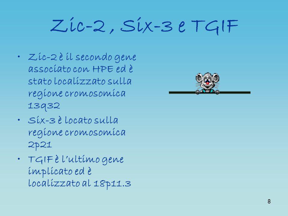 Zic-2 , Six-3 e TGIF Zic-2 è il secondo gene associato con HPE ed è stato localizzato sulla regione cromosomica 13q32.