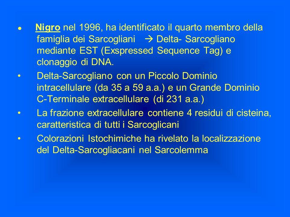 ● Nigro nel 1996, ha identificato il quarto membro della famiglia dei Sarcogliani  Delta- Sarcogliano mediante EST (Exspressed Sequence Tag) e clonaggio di DNA.
