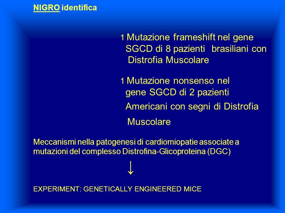NIGRO identifica. 1 Mutazione frameshift nel gene