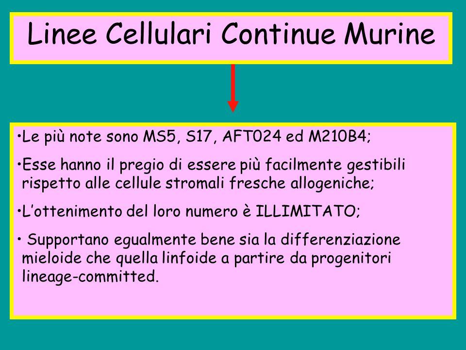 Linee Cellulari Continue Murine