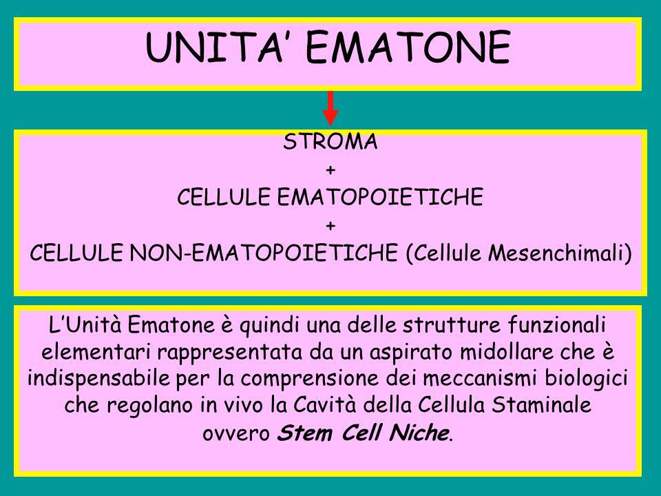 UNITA' EMATONE STROMA + CELLULE EMATOPOIETICHE