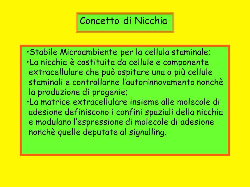 Concetto di Nicchia Stabile Microambiente per la cellula staminale;