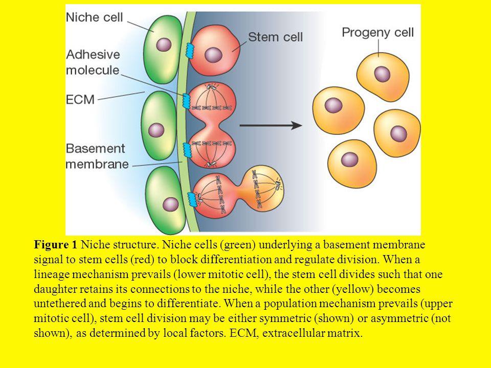 Figure 1 Niche structure