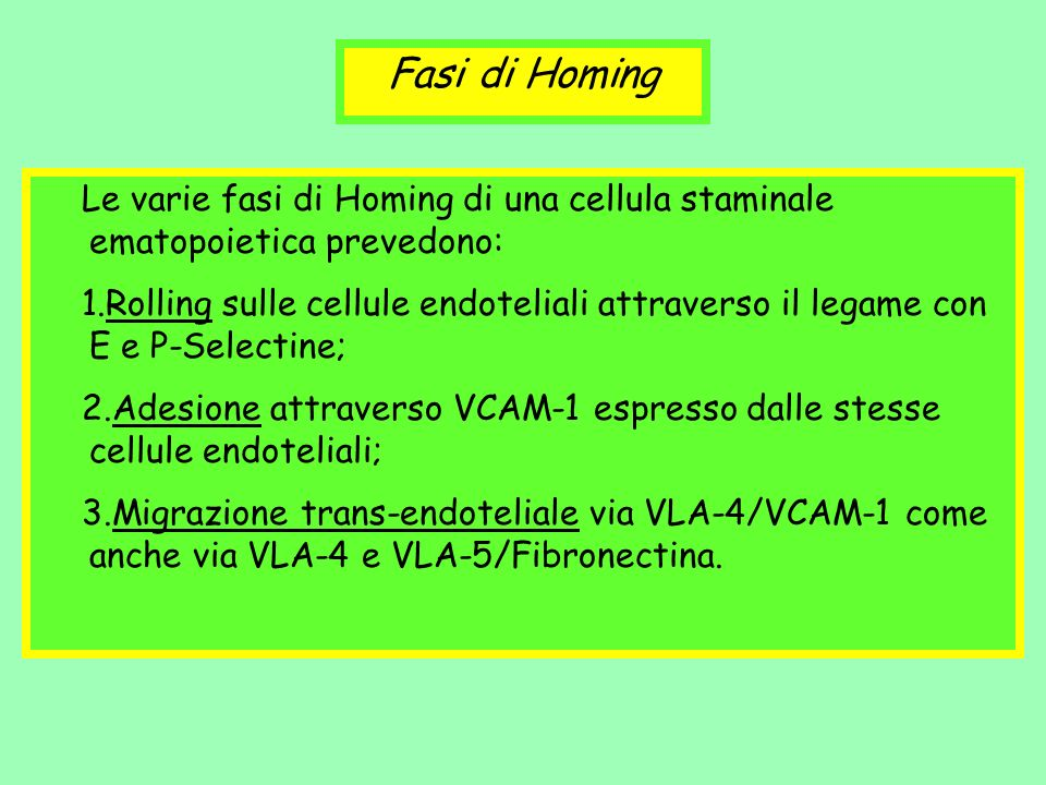 Fasi di Homing Le varie fasi di Homing di una cellula staminale ematopoietica prevedono: