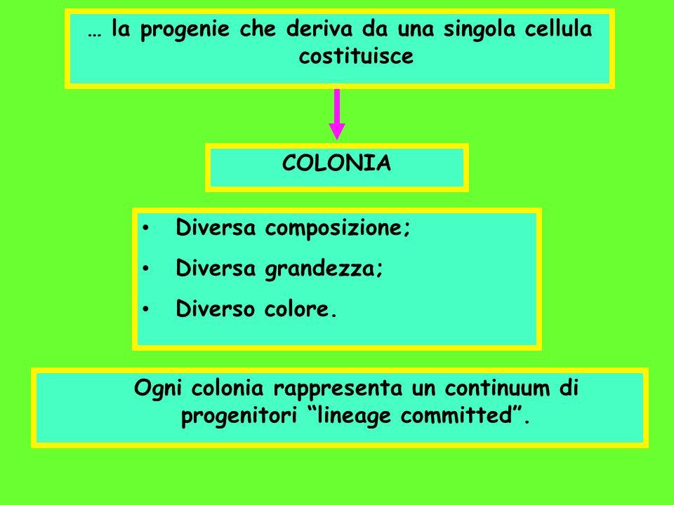 … la progenie che deriva da una singola cellula costituisce