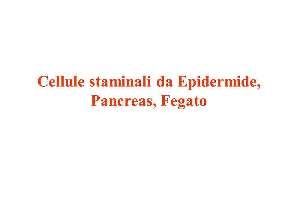 Cellule staminali da Epidermide, Pancreas, Fegato