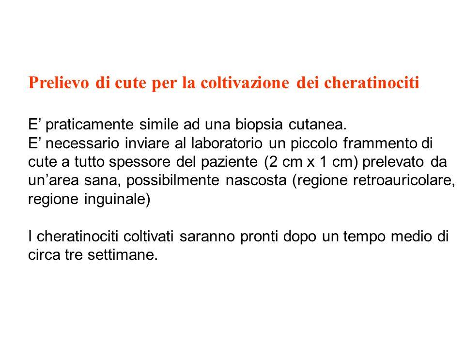 Prelievo di cute per la coltivazione dei cheratinociti