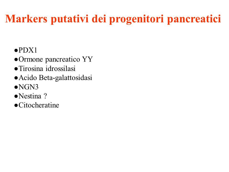 Markers putativi dei progenitori pancreatici