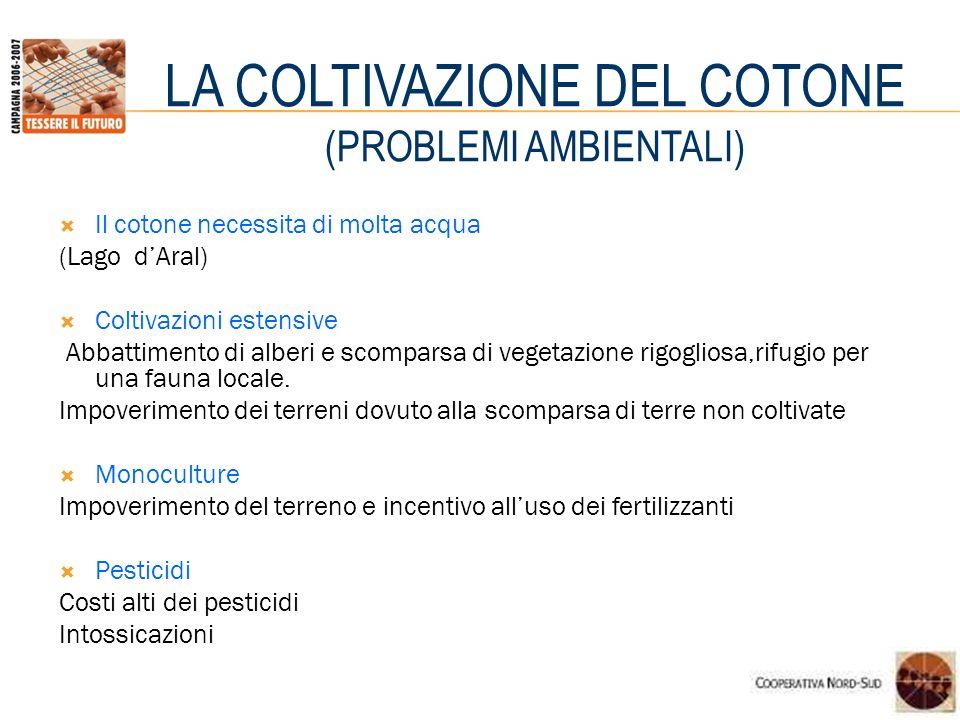 LA COLTIVAZIONE DEL COTONE (PROBLEMI AMBIENTALI)