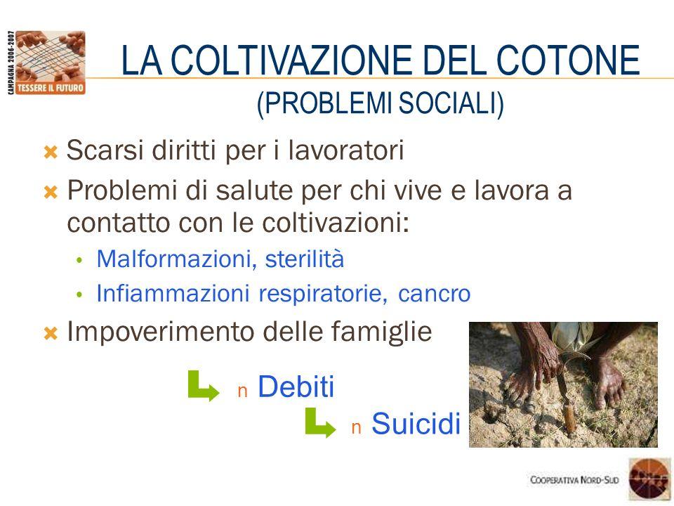 LA COLTIVAZIONE DEL COTONE (PROBLEMI SOCIALI)