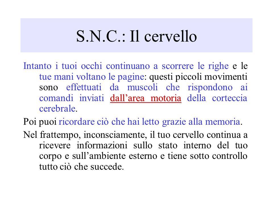 S.N.C.: Il cervello