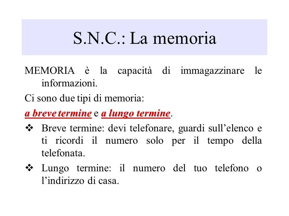 S.N.C.: La memoria MEMORIA è la capacità di immagazzinare le informazioni. Ci sono due tipi di memoria:
