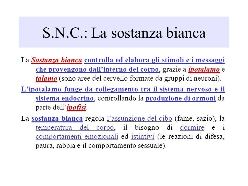 S.N.C.: La sostanza bianca
