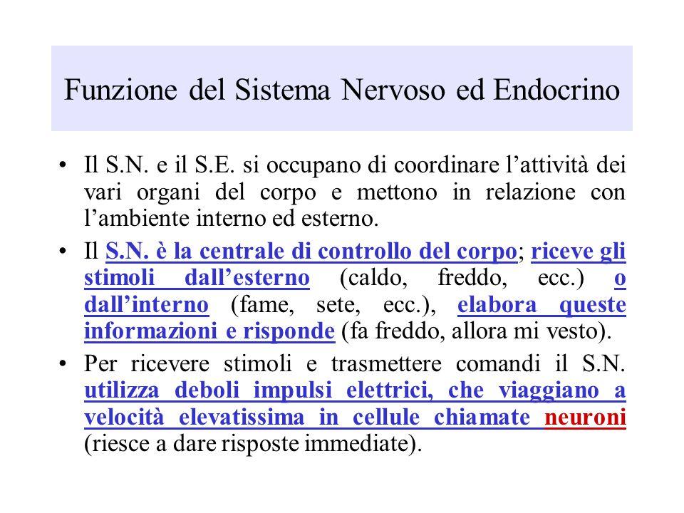 Funzione del Sistema Nervoso ed Endocrino