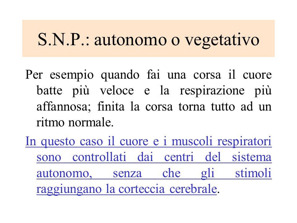 S.N.P.: autonomo o vegetativo