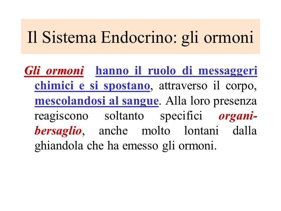 Il Sistema Endocrino: gli ormoni