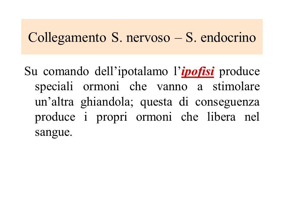 Collegamento S. nervoso – S. endocrino