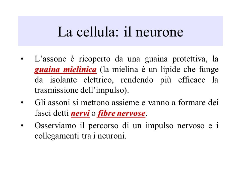 La cellula: il neurone