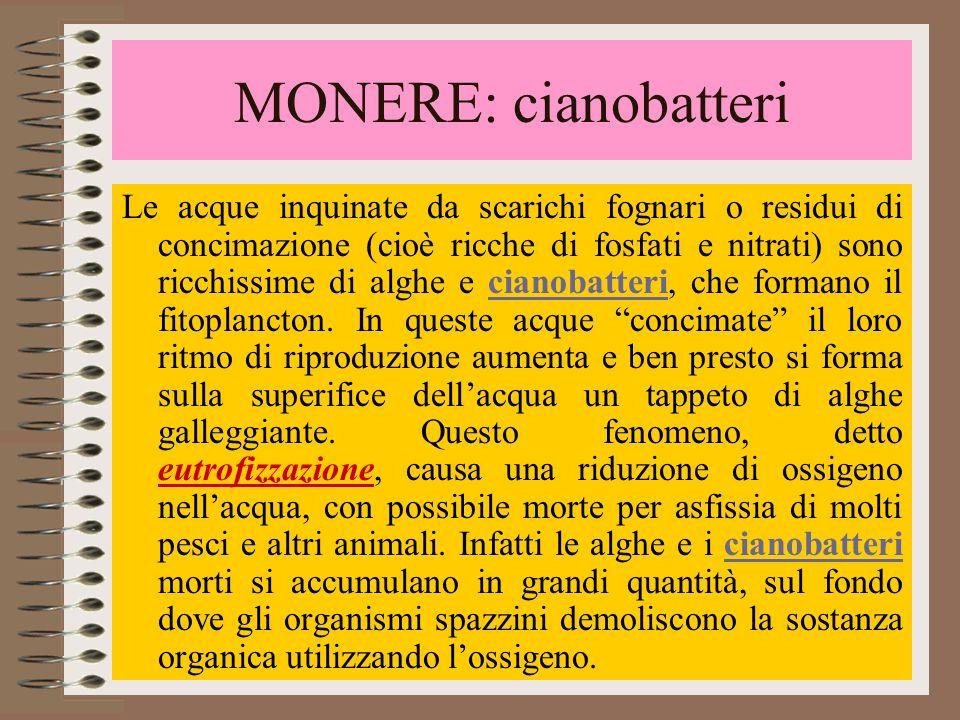 MONERE: cianobatteri