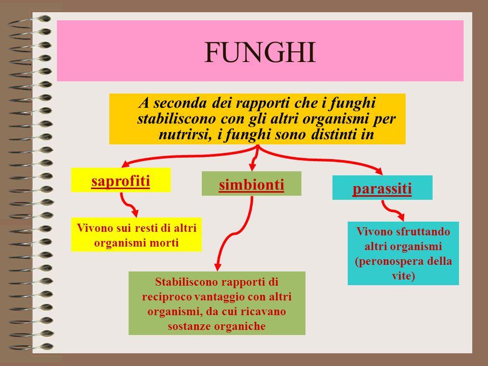 FUNGHI A seconda dei rapporti che i funghi stabiliscono con gli altri organismi per nutrirsi, i funghi sono distinti in.