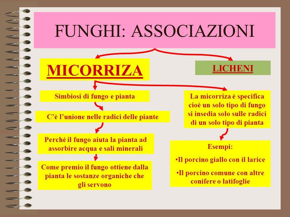 FUNGHI: ASSOCIAZIONI MICORRIZA LICHENI Simbiosi di fungo e pianta