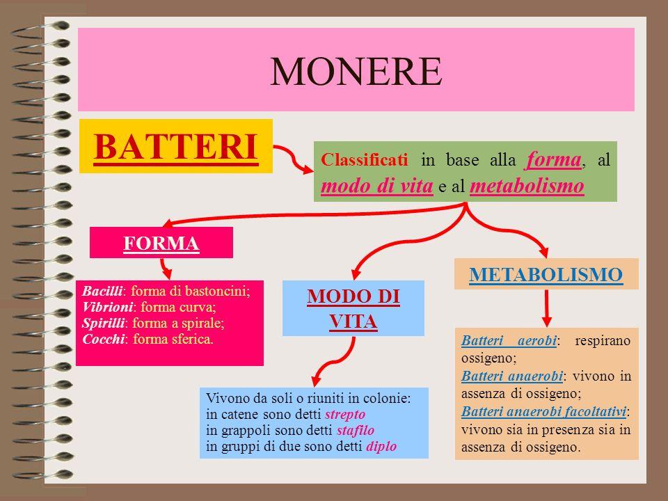 MONERE BATTERI FORMA METABOLISMO MODO DI VITA