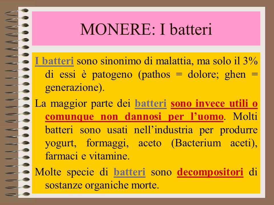 MONERE: I batteri I batteri sono sinonimo di malattia, ma solo il 3% di essi è patogeno (pathos = dolore; ghen = generazione).